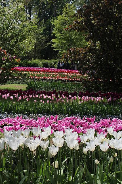 Quelle est la plus belle fleur d'Amsterdam ?