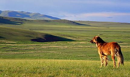 Regard sur la steppe mongole