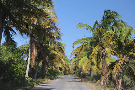 Vamos a la playa, Cayo Jutias