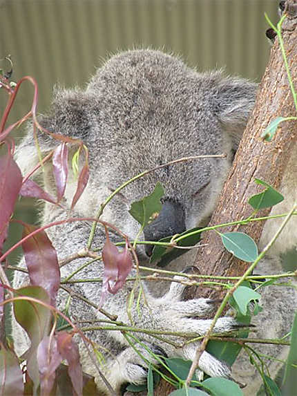 Sydney, Wildlife World