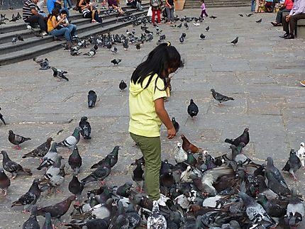 Pigeons en centre ville