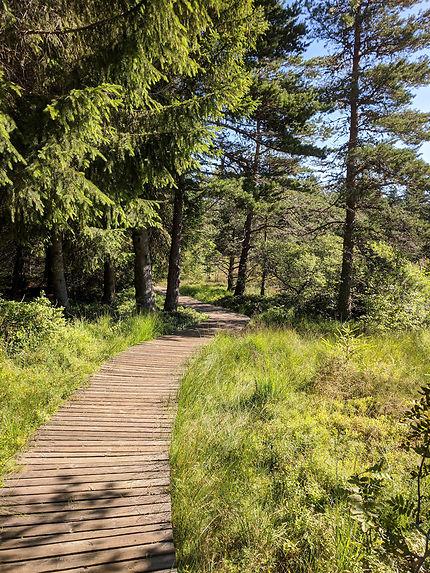 Marcher dans la tourbière de Gimel (parc du Pilat)