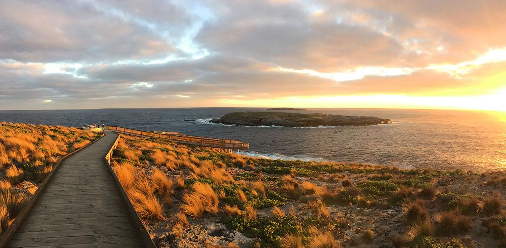 A la découverte de l'île Kangourou
