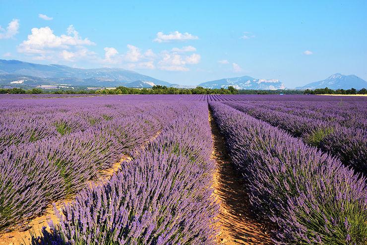 Provence : Valensole, au pays de la lavande