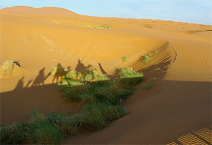 La vie dans le désert