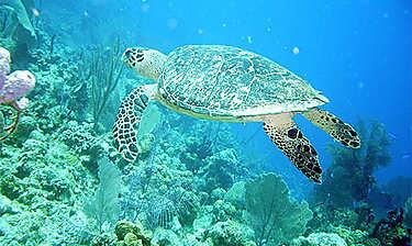Turneffe Atoll (au large de Belize City)