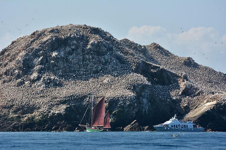 Sept-Îles, l'archipel aux oiseaux