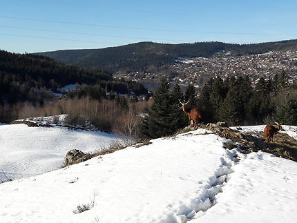 Les hauteurs du lac de Gérardmer