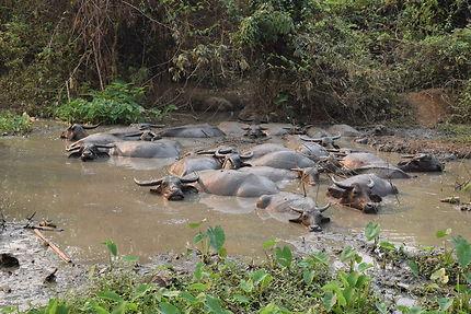 Bain de boue de Luang Prabang