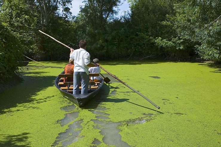 Marais poitevin... on dirait le bayou de Louisiane !