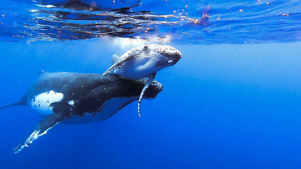 Maman et bébé baleine