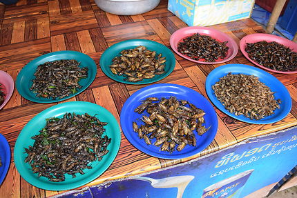 Entomophagie au Laos