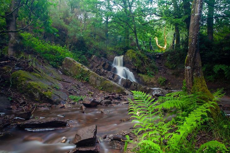 Brocéliande, une forêt de légendes