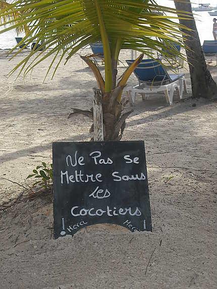 Coco à Saint-François