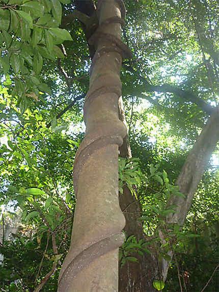 Il est pas beau ce tronc d'arbre ?
