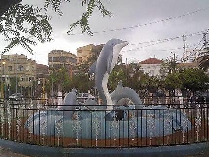 Les dauphins à Staoueli
