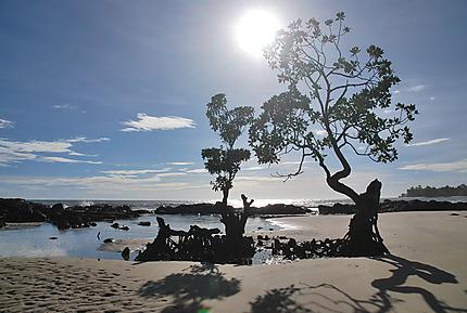 Paysage le long de l'océan à Mahambo