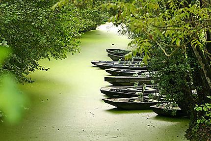 alignement de barques dans une conche