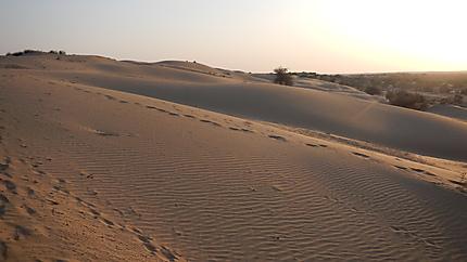 Dunes du Thar (Sam Sand)