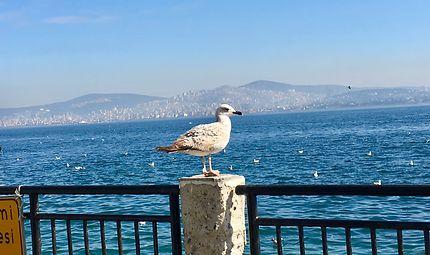Îles aux Princes, Istanbul