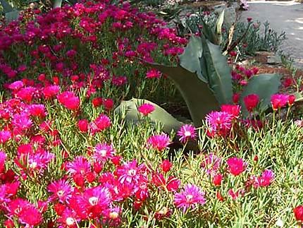 Fleurs de Batz