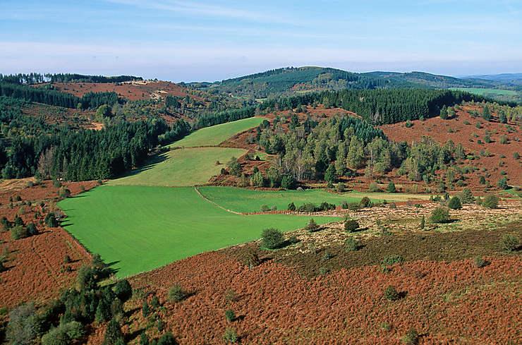 Dans les forêts de Corrèze