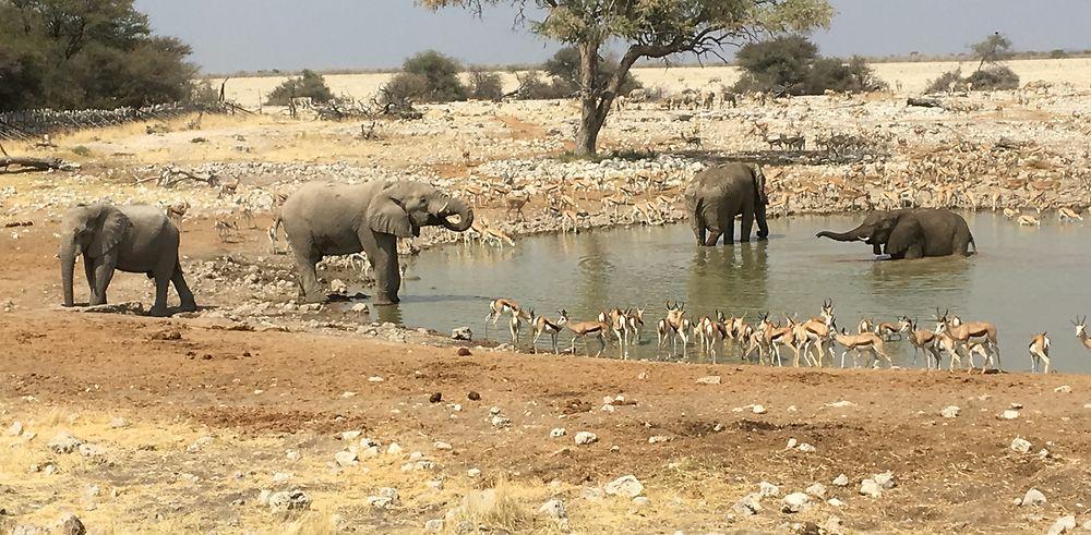 5000 km en Namibie (en passant par le Botswana et le Zimbabwe)