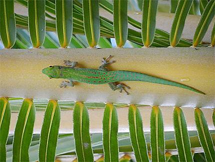 Rencontre avec un gecko