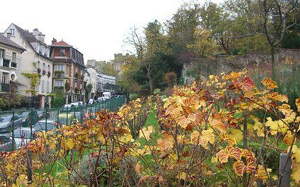 Montmartre - Les vignes