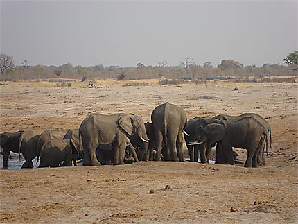 Parc national Hwange