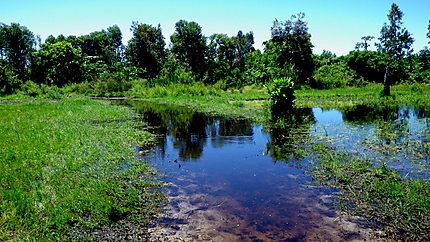 Autour de Mahambo- rizières et brousse