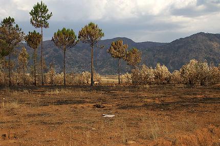 Paysage calciné autour d'Antsirabe, Madagascar