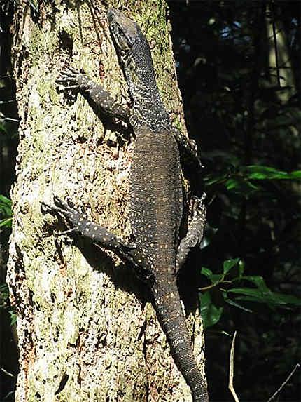 Lamington National Park (Brisbane)