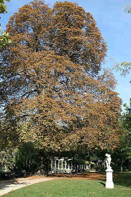Couleurs d'automne au parc Monceau