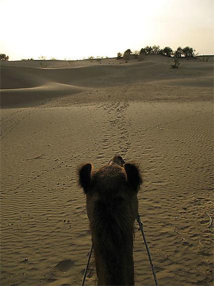 Momo le chameau