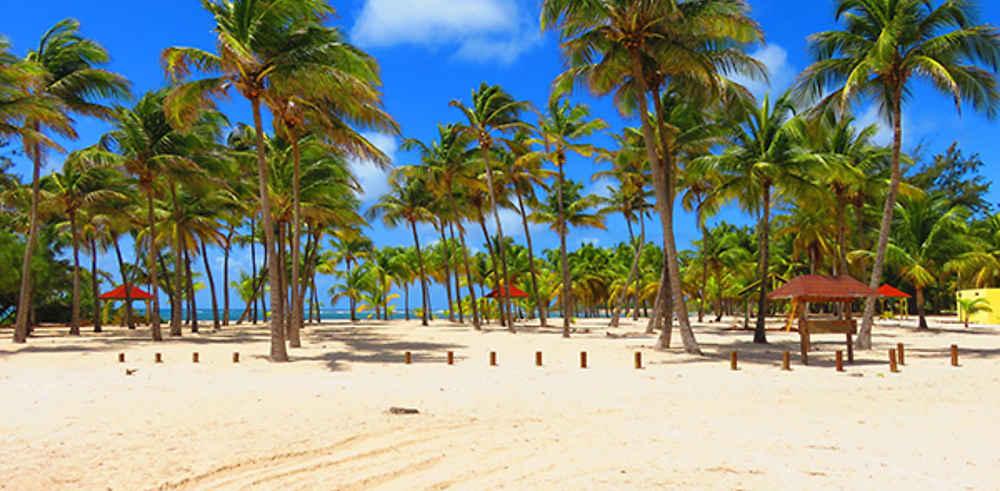 Compte-rendu succinct de 20 jours en Guadeloupe