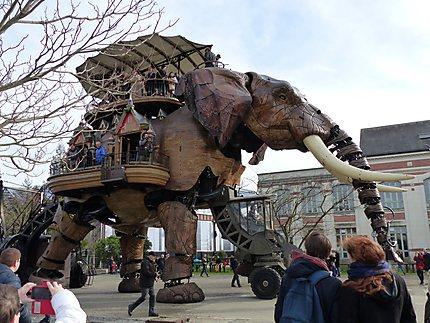 L'éléphant en marche