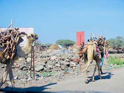 Sur les routes autour de Djibouti