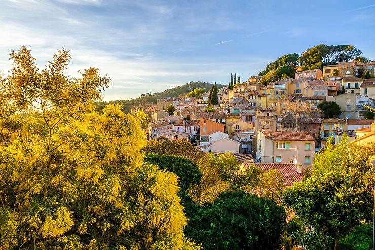 Le mimosa sur la Côte d'Azur