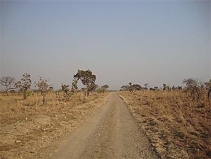 Route dans la savane