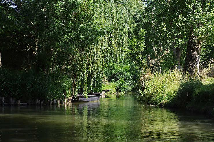 L'anguille du Marais poitevin (Charente-Maritime)