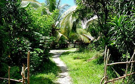 Sentier dans la brousse à Mahambo