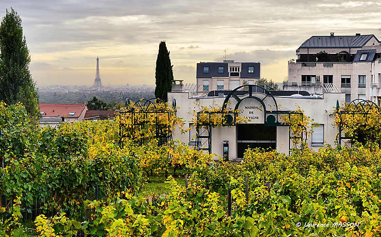 Les vignes de Suresnes (Hauts-de-Seine)