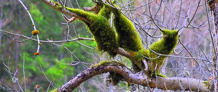 Végétation autour des Sauts du Doubs