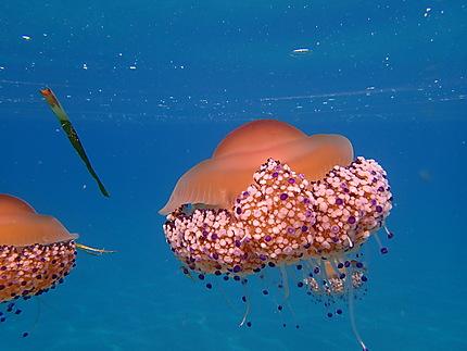 La princesse du bal des méduses