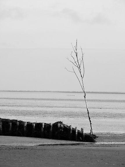 Arbre solitaire face à l'immensité de la mer