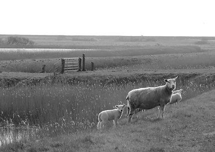 Balade au milieu des moutons