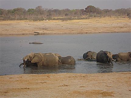 La piscine des éléphants