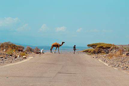 Sur la route de Tadjoura, Djibouti