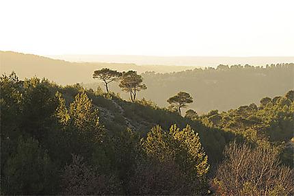 Forêt de Roques Hautes